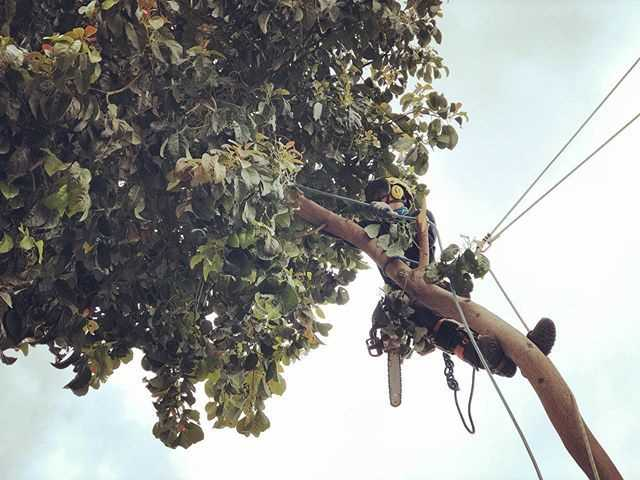 Finding Affordable And Quality Tree Surgery